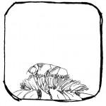 Tiny Schut Tuinoase
